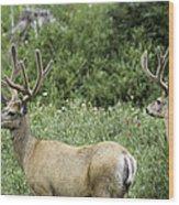 Two Mule Deer Bucks Wood Print