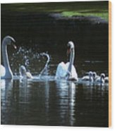 Two Mute Swans With Young Cygnus Olor Wood Print