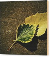 Two Of Birch Leaves Wood Print