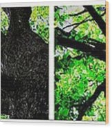 Two Old Trees Wood Print