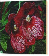 Two Orchids Wood Print by Elizabeth Winter
