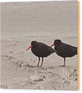 Two Oystercatchers Haematopus Unicolor On Beach Wood Print