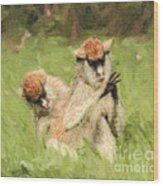 Two Patas Monkeys Erythrocebus Patas Grooming Wood Print