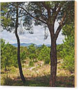 Two Pine Trees Wood Print by Carlos Caetano