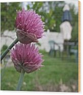 Two Pink Chives Wood Print