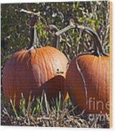 Two Pumpkins Wood Print