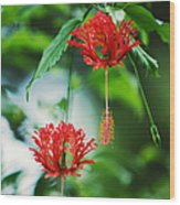 Two Red Hibiscus Wood Print