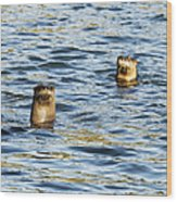 Two River Otters Wood Print