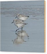 Two Running Sandpipers Wood Print