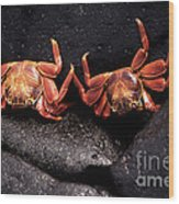 Two Sally Lightfoot Crabs Wood Print