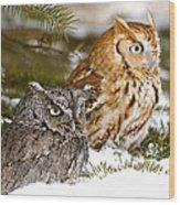 Two Screech Owls Wood Print