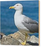 Two Seagull Wood Print