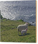 Two Sheep On The Cliffs At Sleive League - Donegal Ireland Wood Print