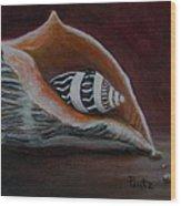 Two Shells Wood Print