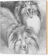 Two Shelties Pencil Portrait Wood Print