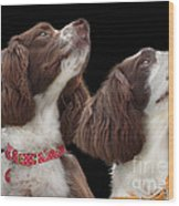 Two Spaniels Wood Print