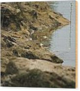 Two Spotted Sandpipers On The Flint Rivers Banks Wood Print