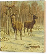 Two Stags In A Clearing In Winter Wood Print