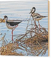 Two Stilts At The Pond Wood Print