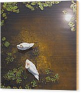 Two Swans With Sun Reflection On Shallow Water Wood Print
