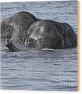 Two Swimming Elephants Wood Print