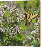 Two Tailed Swallowtail Wood Print