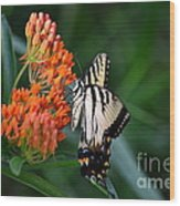 Two-tailed Swallowtail Wood Print