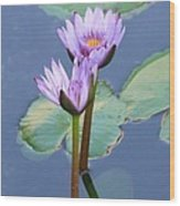 Two Tall Water Lilies Wood Print