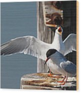 Two Terns Wood Print by Diane Rada