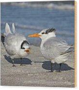Two Terns Talking Wood Print