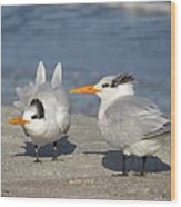 Two Terns Watching Wood Print