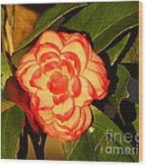 Two-tone Camellia Wood Print