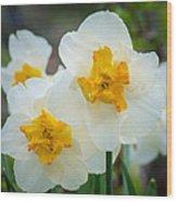 Two-toned Daffodils Wood Print