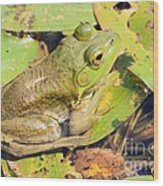 Two Toned Frog Wood Print