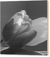 Two Tulips In Black And White Wood Print