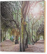 Two Tunnels Taxus Wood Print