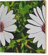 Two White Daisies Wood Print