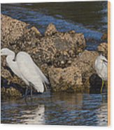 Two White Herons And A Coot Wood Print