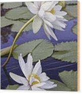 Two White Lilies Wood Print