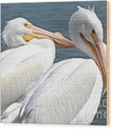 Two White Pelicans Wood Print