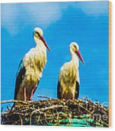 Two White Storks 16 Wood Print