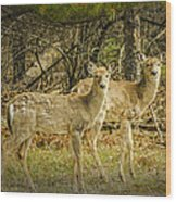 Two White Tailed Deer Wood Print