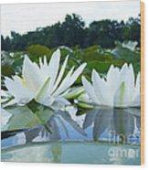 Two White Waterlilies Wood Print