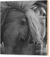 Two Wild Stallions Close Wood Print