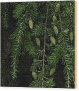 Tyler Baby Pinecones 1 Wood Print