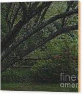 Tyler Tree 1 Wood Print