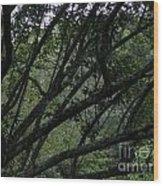 Tyler Tree 2 Wood Print