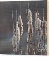 Typha Cattail Spikes Seeds Wood Print