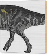 Tyrannosaurus Rex, A Large Predator Wood Print