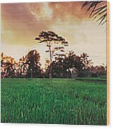 Ubud Rice Fields Wood Print